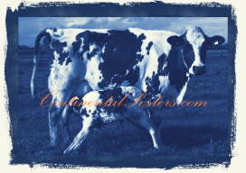 Cow with calf blue