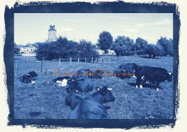 cow herd and church tower blue c